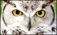 owl-IMG_2715-as-Smart-Object-1